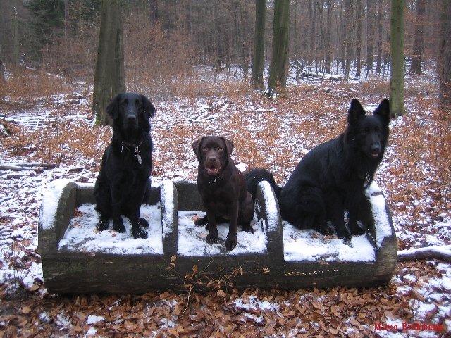 Folge 60: Hunde